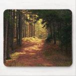 Sunlit Forest Path Mousepads
