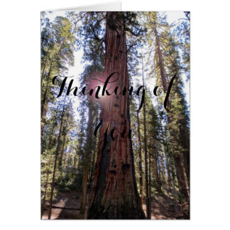 Sunlit Forest Thinking of You Card