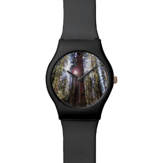 Sunlit Forest Watch