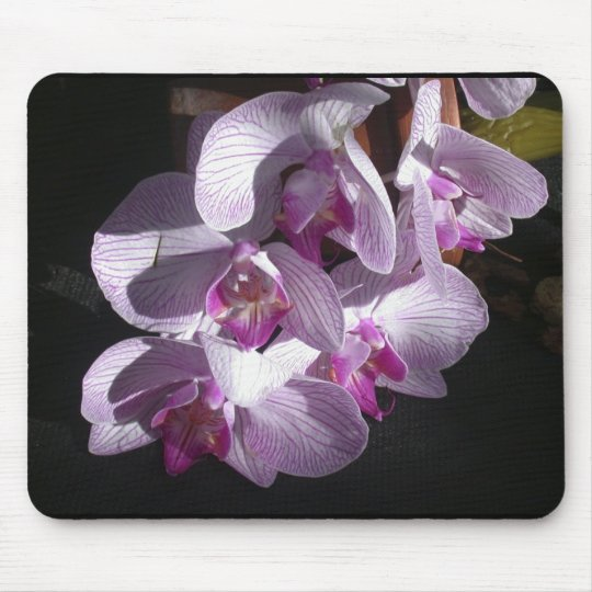 Sunlit Orchids Mouse Pad