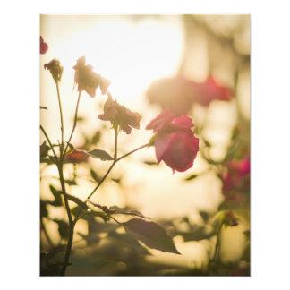 Sunlit rose art photo