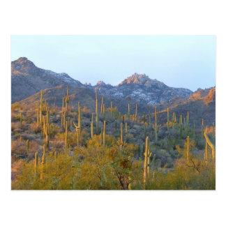 Sunlit Saguaro Field Postcard