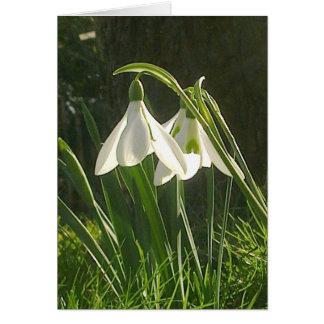 Sunlit Snowdrops Card