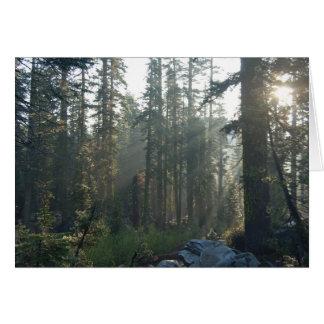 Sunlit Solitude Card
