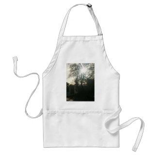 Sunlit tree. standard apron