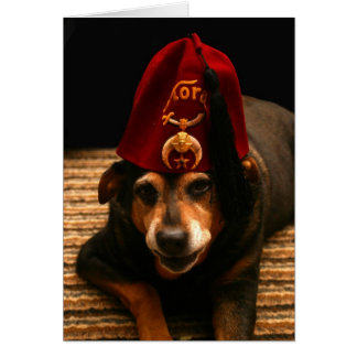 Sunny in a Fez - Greeting Card (blank inside)