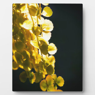 Sunny leaves plaque