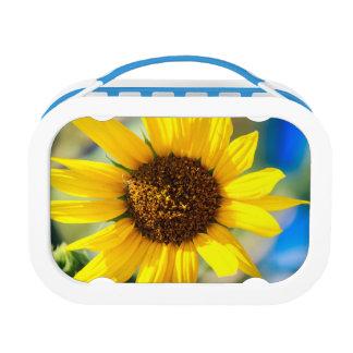 Sunny Lunch Box