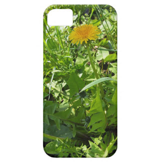 Sunny meadow with yellow dandelions iPhone 5 cases