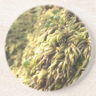 Sunny Moss and Worts Coaster