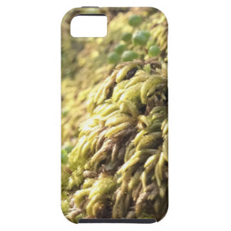 Sunny Moss and Worts iPhone 5 Cover