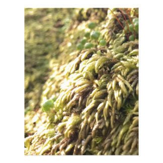 Sunny Moss and Worts Letterhead