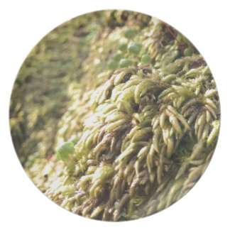 Sunny Moss and Worts Plate