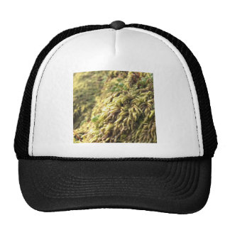Sunny Moss and Worts Trucker Hat
