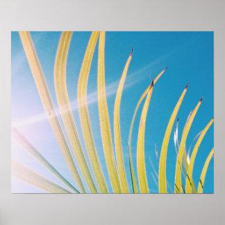 Sunny Palm Tree Leaf Poster