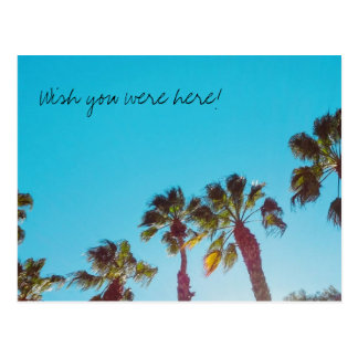 Sunny Palms Wish You Were Here Postcard