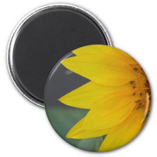 Sunny Petals magnet