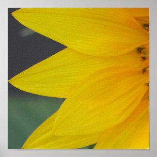 Sunny Petals print