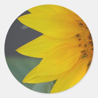 Sunny Petals sticker