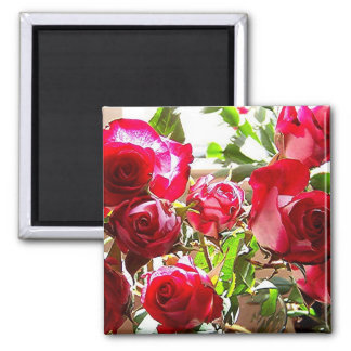 Sunny Roses Square Magnet