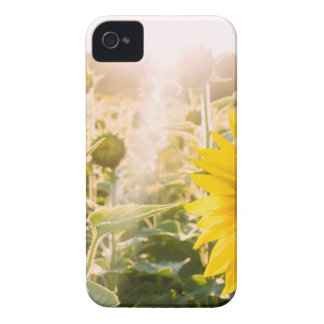 Sunny Sunflower Field iPhone 4 Cases