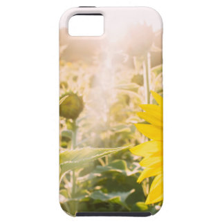 Sunny Sunflower Field iPhone 5 Cover