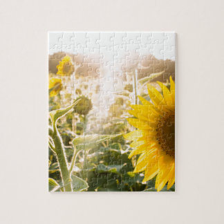 Sunny Sunflower Field Jigsaw Puzzle