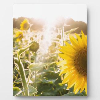 Sunny Sunflower Field Plaque