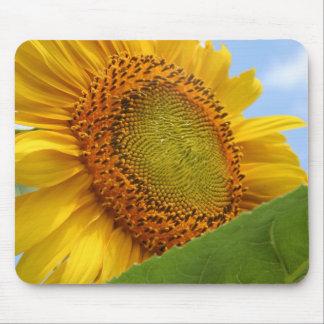 Sunny Sunflower Mouse Mats