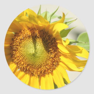 Sunny Sunflower sticker