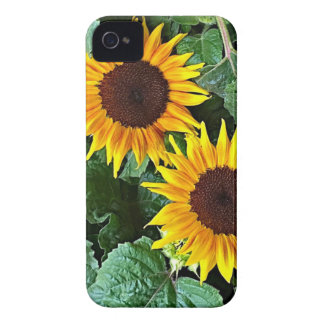 Sunny Sunflowers iPhone 4 Case-Mate Cases
