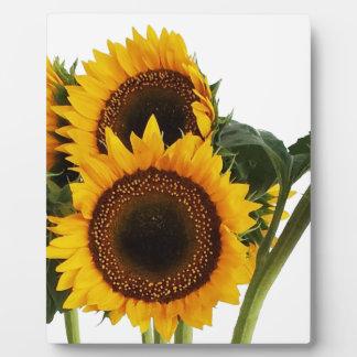 Sunny Sunflowers Plaque