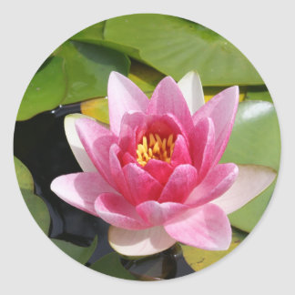 Sunny Waterlily Classic Round Sticker