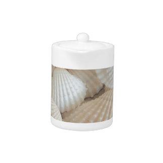 Sunny White Seashells, Summer Beach Exotic
