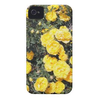 Sunny Yellow Rose Flowers Bus iPhone 4 Case