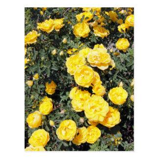 Sunny Yellow Rose Flowers Bus Postcard