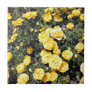 Sunny Yellow Rose Flowers Bus Tile