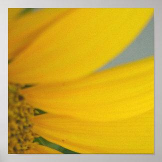 Sunny's Petals print