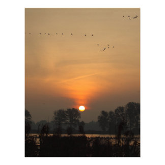 Sunrise at a lake with flying birds. letterhead
