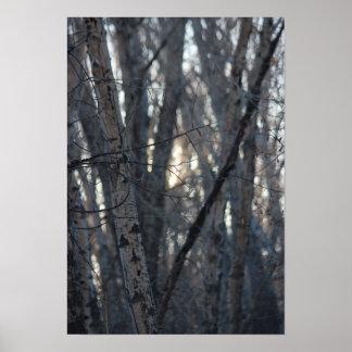 Sunrise at Ojito Creek Poster