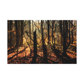 Sunrise forest trees and shadows canvas print