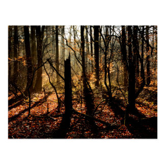 Sunrise in the winter forest, trees and shadows postcard