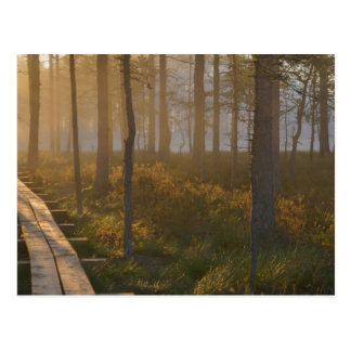 Sunrise in Viru bog at Lahemaa National Park Postcard
