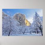 Sunrise light hits El Capitan through snowy Poster