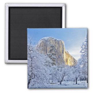 Sunrise light hits El Capitan through snowy Square Magnet