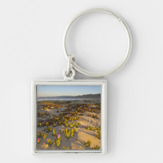 Sunrise lights the sand dunes and sea fig at Silver-Colored square keychain