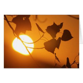 Sunrise Note Cards