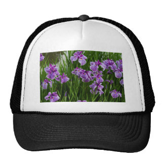Sunrise Purple Trucker Hat