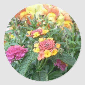 Sunrise Rose Lantana Classic Round Sticker