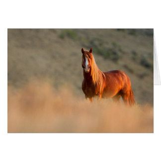 Sunrise Stallion Wild Horse Greeting Card
